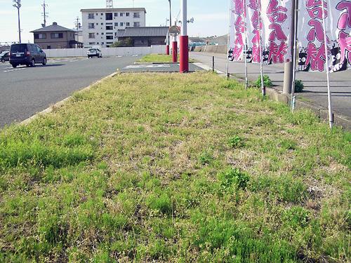 元気な草達・・・緑の絨毯みたいです。