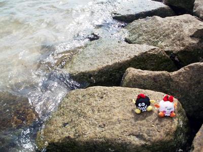 沖縄の海と比べてはダメですよ