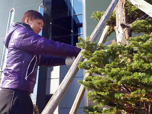口田店の木を守ろう&できればツリーも大作戦