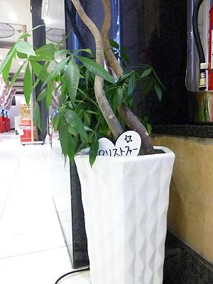 植物のクリストファーです!