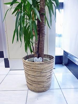 植物のナンシーです!