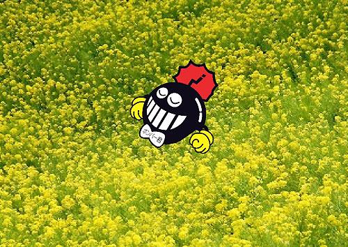 菜の花畑で・・・zzz