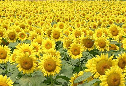 黄色い物 その2
