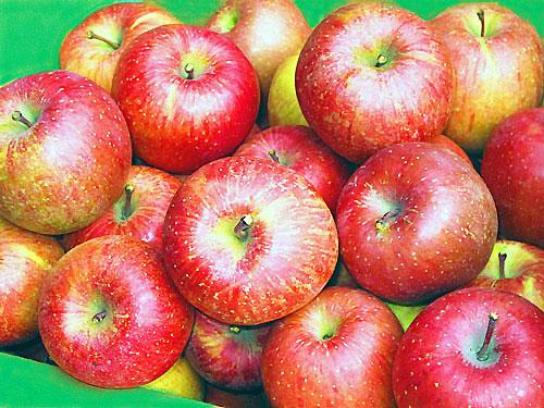 りんご・・・老化防止♪