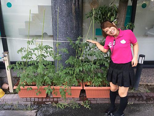 トマトのグングン成長してます