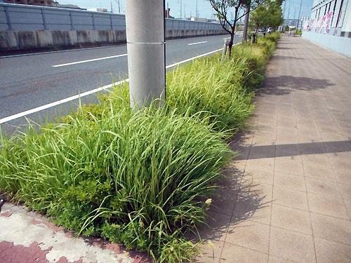 知多横断道路沿いの歩道