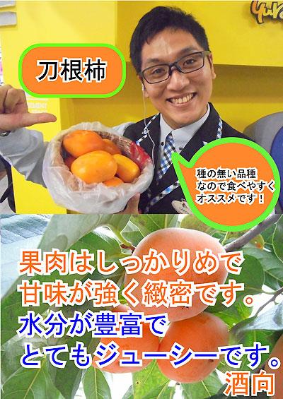 刀根柿(酒向君)