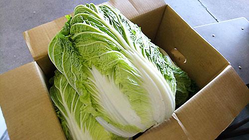 野菜の取り扱いも始めました