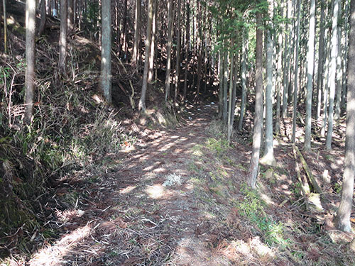 『森林浴』