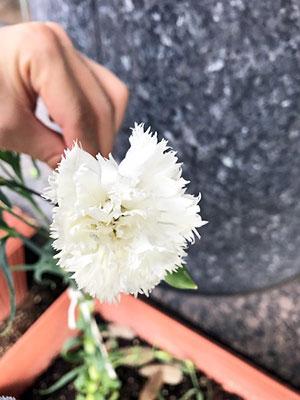 白もとても綺麗!