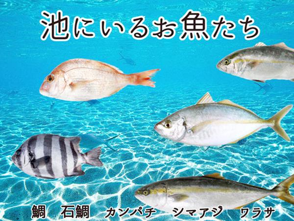 釣れるお魚は?