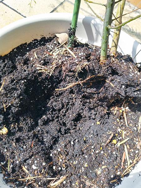 食い荒らされた根