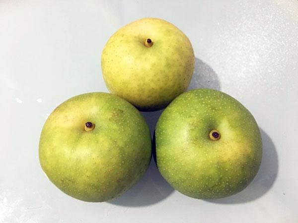 これが二十世紀梨の見た目です