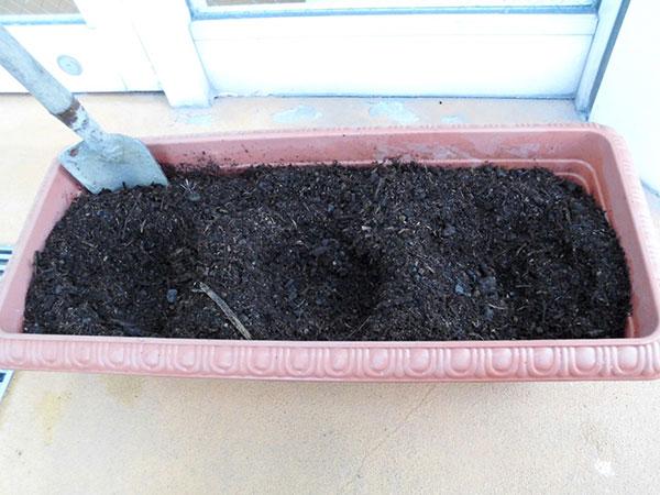 苗を植える穴