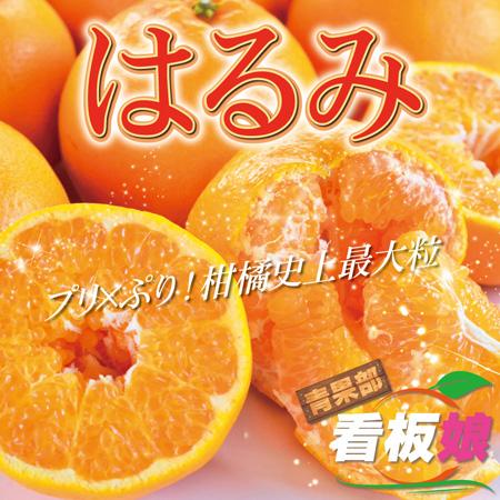 大粒でプチプチした果肉がとってもジューシー!愛知県蒲郡産はるみ(みかん)編💗有楽青果部看板娘おすすめ果物