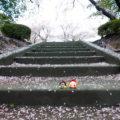 春を楽しもう!!豊明市『三崎水辺公園』
