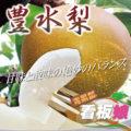 有楽青果部看板娘おすすめ果物❤豊水編